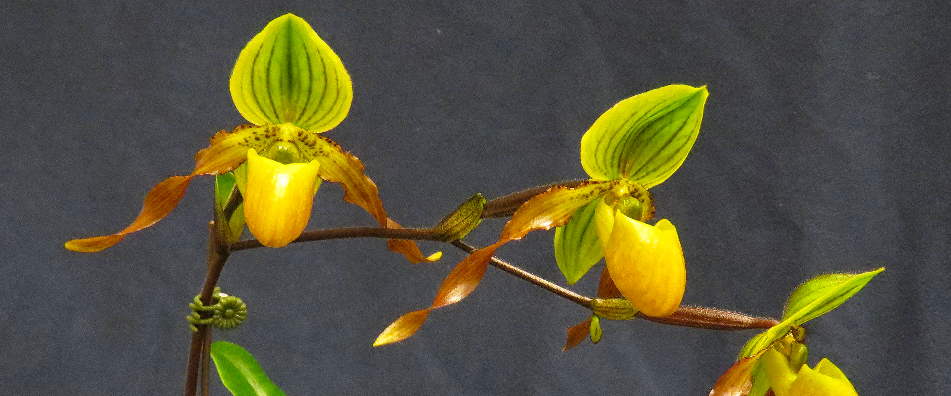 2019 Annual Orchid Auction - Victoria BC
